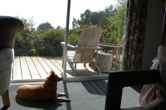 The Andiron -- Seaside Inn & Cabins : Sun tanning while the uprights were relaxing