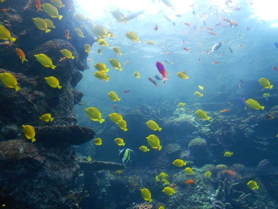 Georgia Aquarium: Huge Fish Tank
