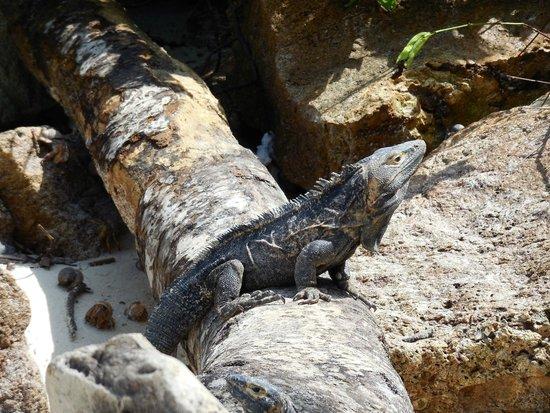 Casa Lajagua : Isla Iguana