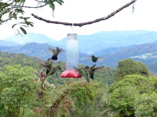 Paraiso Quetzal Lodge: Jardín de Colibríes