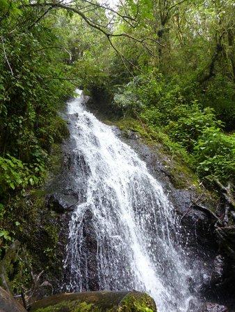 Paraiso Quetzal Lodge: Cascada Bromelia (Zeledonia)