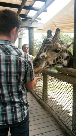 Brevard Zoo: You can feed the giraffes for a $1.00