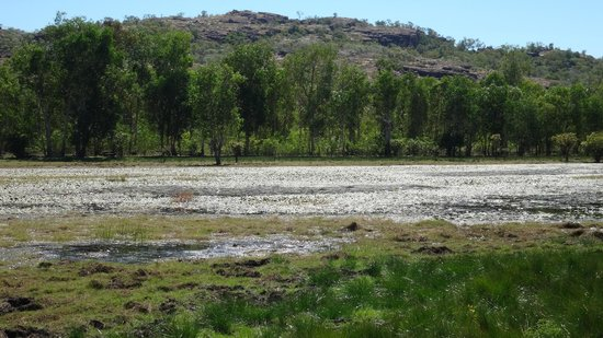 Nourlangie: Wetlands