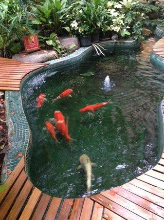 Pantip Suites Sathorn : Fidh pond