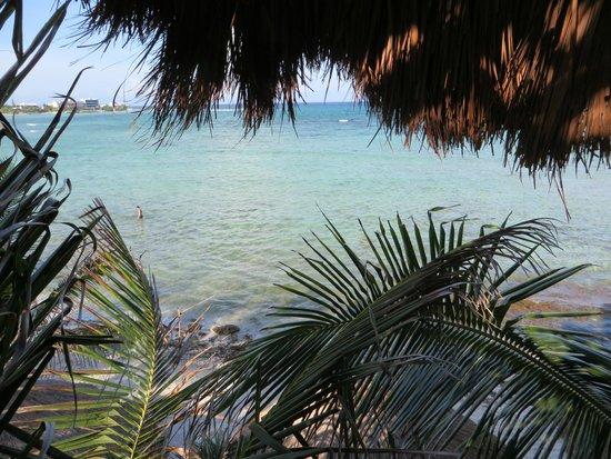 La Buena Vida: View from Treehouse