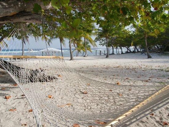 Cayman Brac Beach Resort: Relax on one of the many strategically placed hammocks