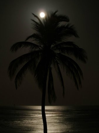Cayman Brac Beach Resort: Palm tree near the beach in the moonlight