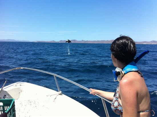 Buceo Carey: Mobulas saltando fuera del agua