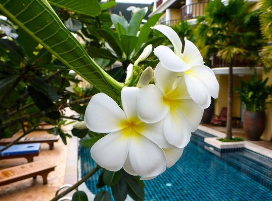 Phuket Graceland Resort & Spa: Beautiful flowers everywhere
