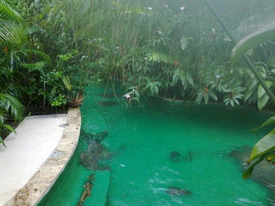 Paradise Hot Springs: piscina caliente