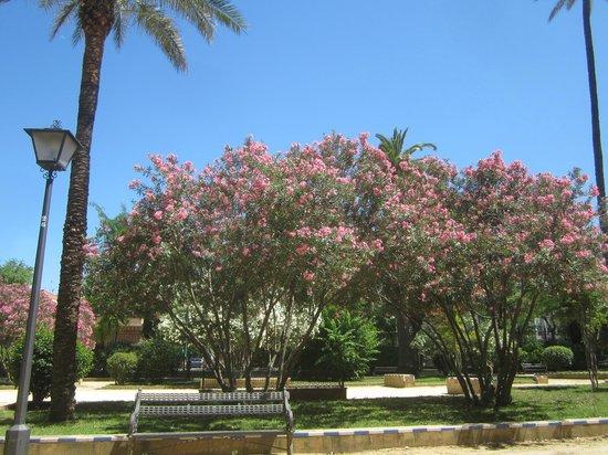 Jardines de Murillo: сады Мурильо