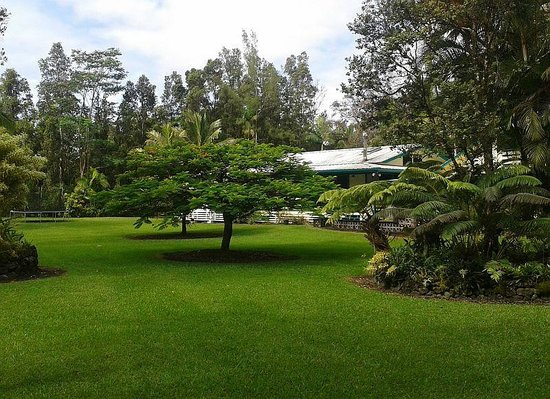 Hale Moana Bed & Breakfast: backyard