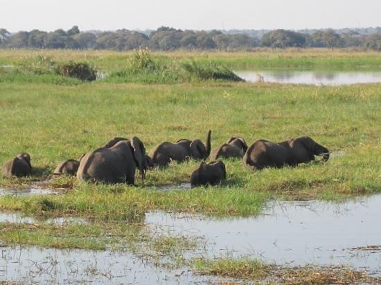 Imbabala Zambezi Safari Lodge : imbabala eliphants