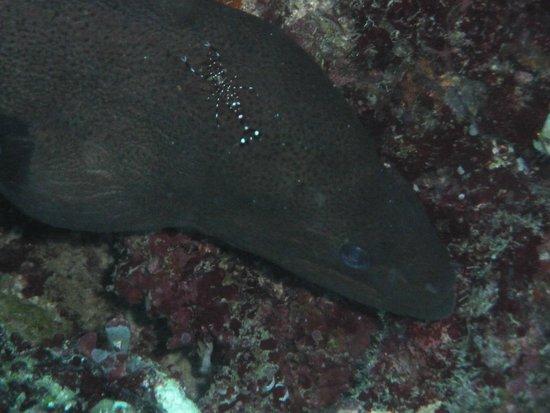 Biyadhoo Island Resort: Moray with Cleaner Shrimp