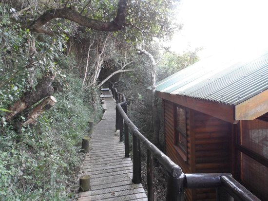 Wilderness Bushcamp : Walk way