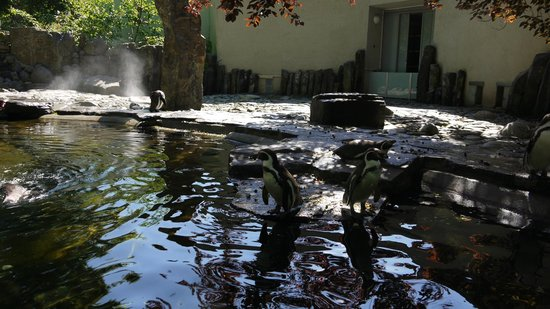 Prager Zoo: Пингвины