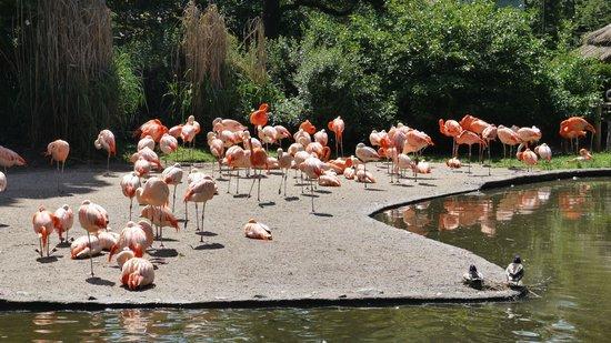 Prager Zoo: Фламинго