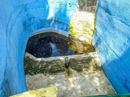 Melka Excelsior Resort Hotel : tiny alligator enclosure