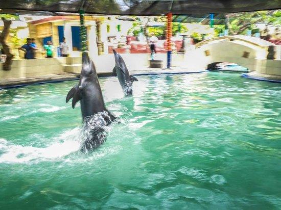 Melka Excelsior Resort Hotel : the dolphins