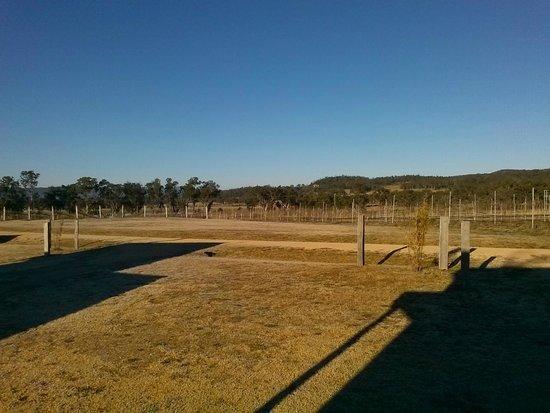 Ridgemill Estate: Cabins in the Vineyard: Ridgemill Vines in Winter