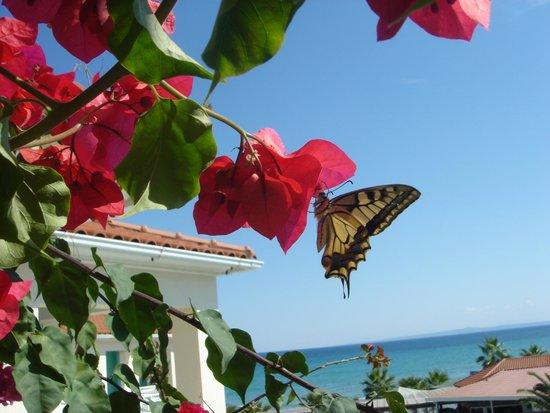 Tsilivi Beach Hotel: Тсиливи Бич