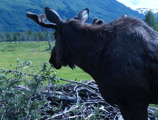Alaska Wildlife Conservation Center: Amazing place to spend the day.