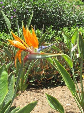 Doramas Park: Flora autóctona