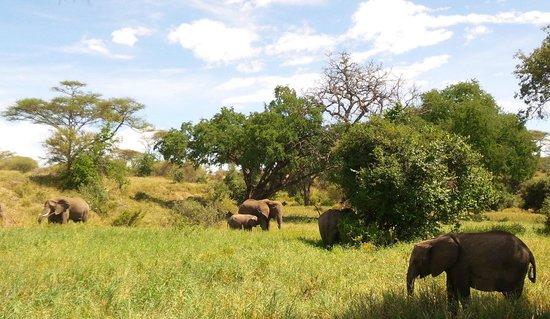 Osupuko Lodge : view