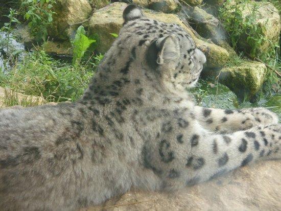Twycross Zoo : taken from cafe