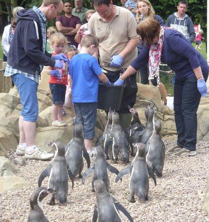 Twycross Zoo : penguin encounter