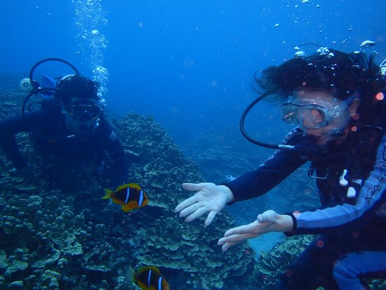 Grotto Snorkeling Sightseeing Day Tours - Sea Lovers: ほらお逃げ!!
