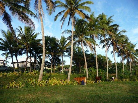 Namuka Bay Lagoon Resort: Around the grounds