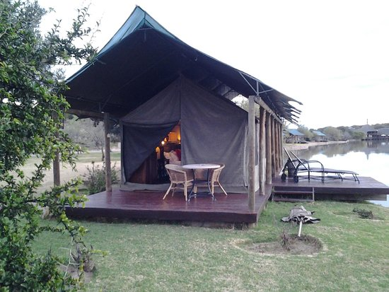 Buffelsdrift Game Lodge : Luxury tent overlooking waterhole