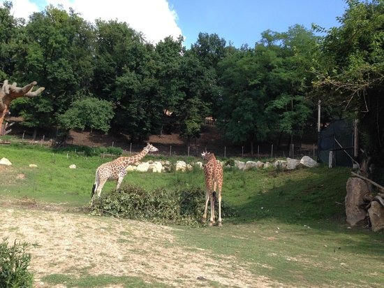 Parco Natura Viva: Safari