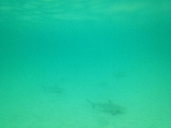 Aow Leuk Bay: Baby black tipped reef sharks, please exercise caution and don't scare them away!
