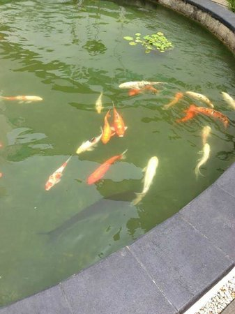 Village Hotel Changi by Far East Hospitality: Koi Feeding