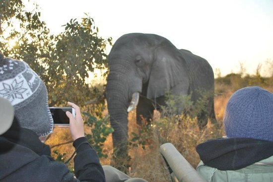 Idube Private Game Reserve Lodge : Close encounters (1)
