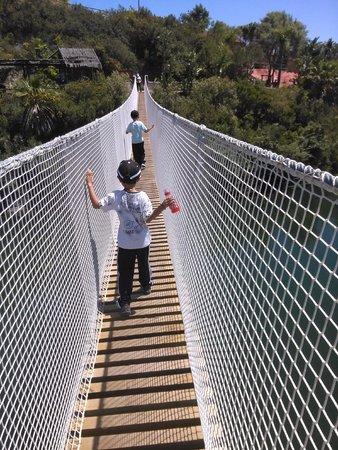 Selwo Aventura: Puente colgante