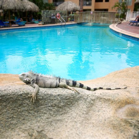 Tamarijn Aruba All Inclusive: poolen :)
