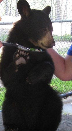Oswald's Bear Ranch: Baby bear