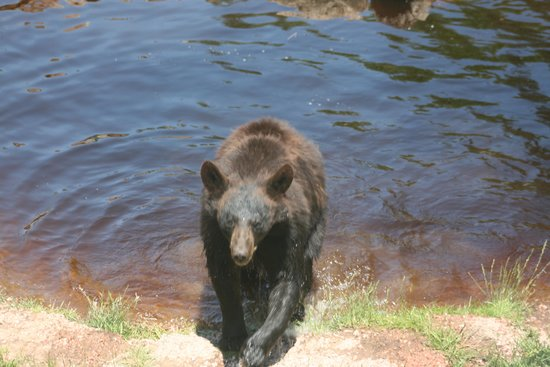 Oswald's Bear Ranch: Finished swimming