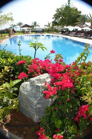 Le Meridien Al Aqah Beach Resort : бассейн
