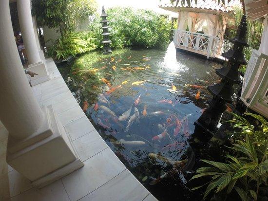 Gran Melia Golf Resort Puerto Rico : Fish Pond