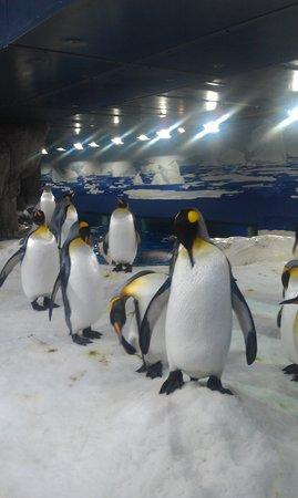 Kelly Tarlton's Sea Life Aquarium: ぺんぎん