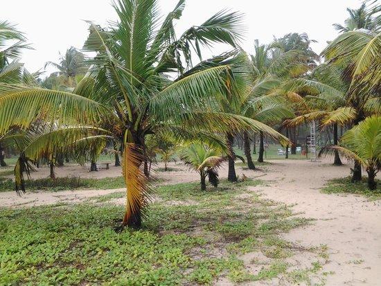 Marari Beach Resort: esterno