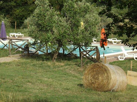 Locanda del Galluzzo: piscina e balle di fieno