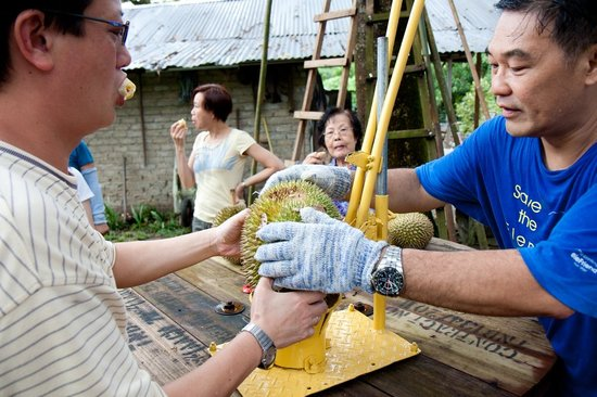 Hasil gambar untuk Jimmy's Durian Orchard