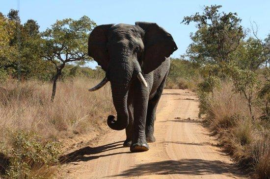 Fifty Seven Waterberg: Elephant Encounter