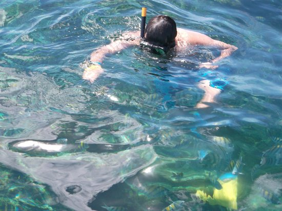 Ocean Adventures Bavaro Splash : Feeding fishes