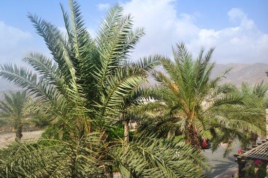 Miramar Al Aqah Beach Resort: View towards Mountains